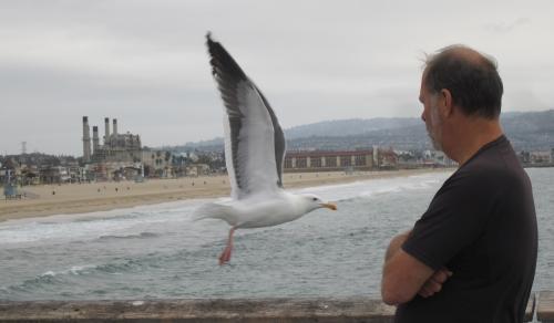 A Bird on the Pier