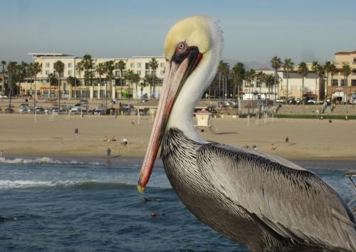 Happy Bird on the Beach