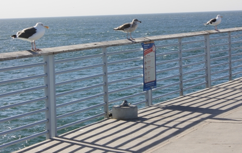 img_4455-birds