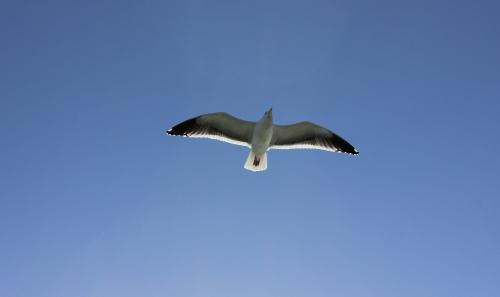 img_4469-bird
