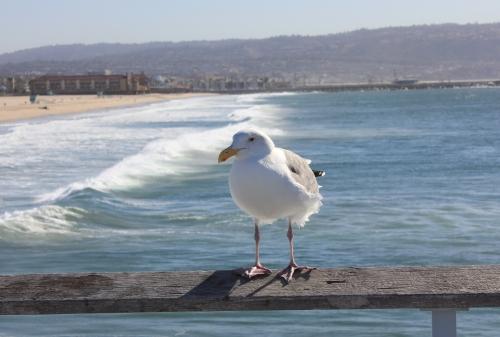 img_4492-surf2